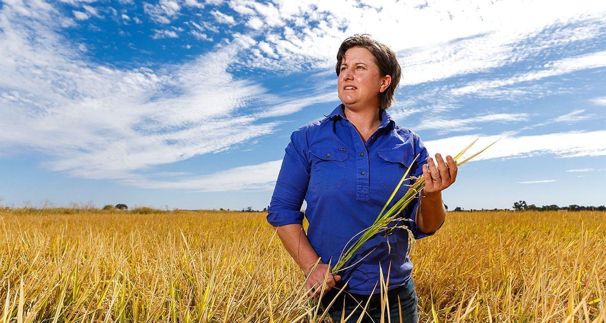 Growing Rice in Deniliquin