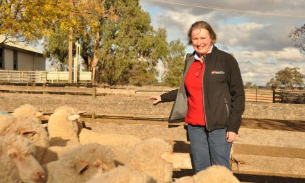 Magnificent Merinos: Designer clothing, sportswear and Sunday roast
