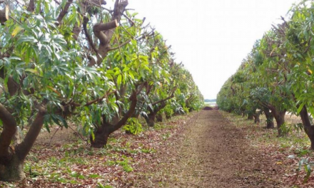 Accurate yield forecasting and better tree crop management focus of $5M project