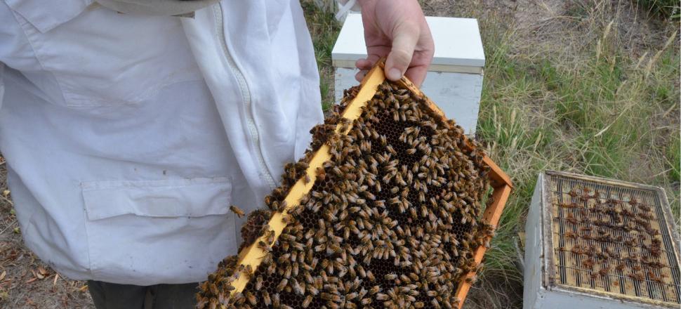 Best practice for Victorian beekeepers