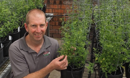 Pulses have a field day at Horsham