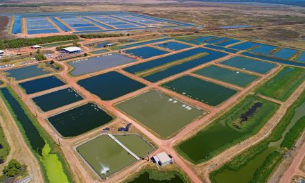 Northern Australia gears up for TropAg Conference