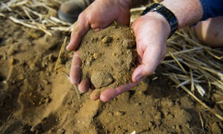 WA farmer using dung beetle and cattle manure to tackle climate-change