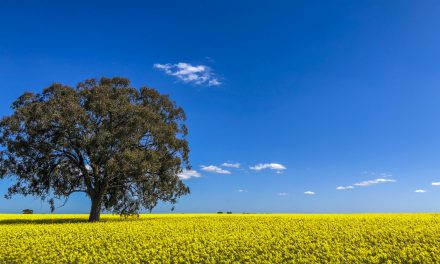 Advice available on minimising canola losses