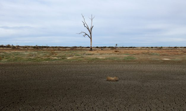Producers reminded to use CVDs as drought continues